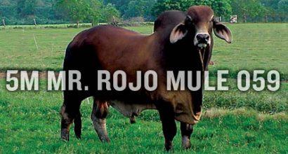 5M Mr. Rojo Mule 059