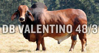 DB Valentino 48/3